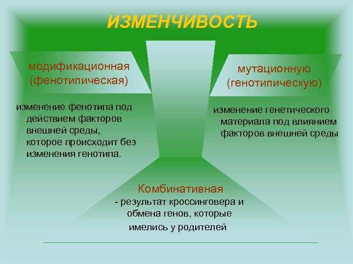 ИЗМЕНЧИВОСТЬ модификационная (фенотипическая) мутационную (генотипическую) изменение фенотипа под действием факторов внешней среды, которое происходит