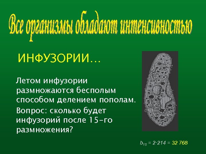 ИНФУЗОРИИ… Летом инфузории размножаются бесполым способом делением пополам. Вопрос: сколько будет инфузорий после 15