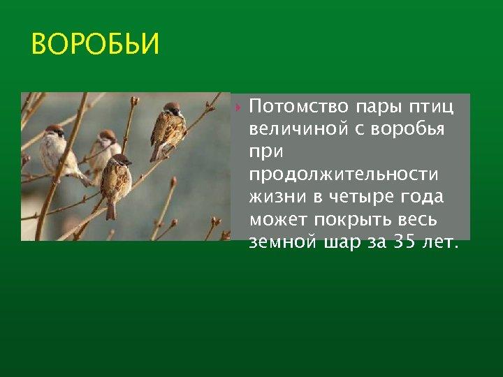 ВОРОБЬИ Потомство пары птиц величиной с воробья при продолжительности жизни в четыре года может