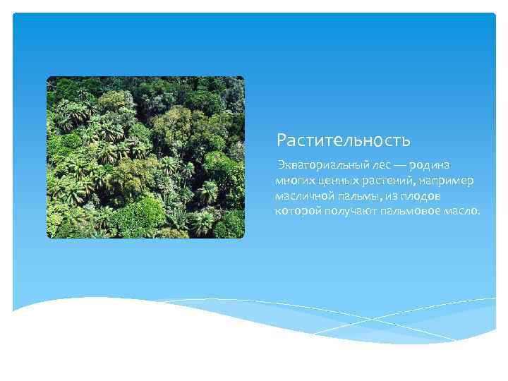 Растительность Экваториальный лес — родина многих ценных растений, например масличной пальмы, из плодов которой