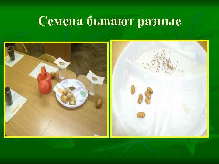 Семена бывают разные