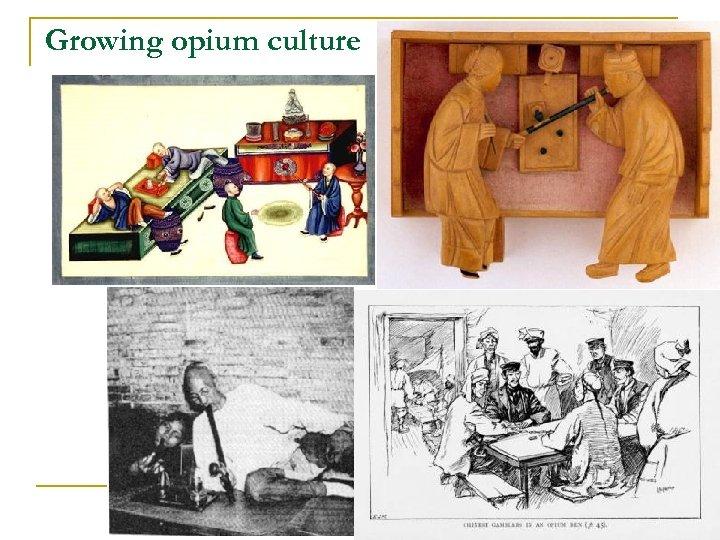 Growing opium culture