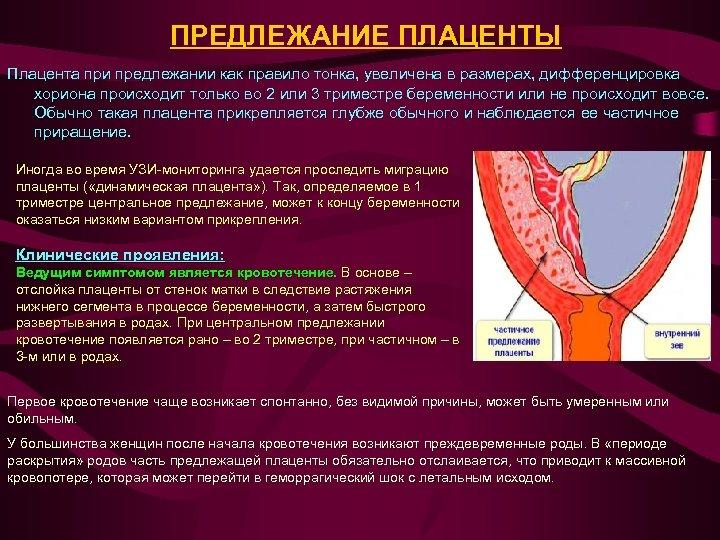ПРЕДЛЕЖАНИЕ ПЛАЦЕНТЫ Плацента при предлежании как правило тонка, увеличена в размерах, дифференцировка хориона происходит