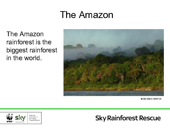The Amazon rainforest is the biggest rainforest in the world. © ZIG KOCH /