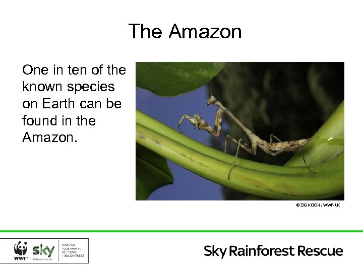 The Amazon One in ten of the known species on Earth can be found