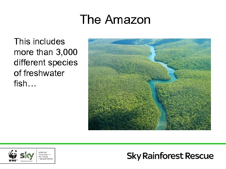 The Amazon This includes more than 3, 000 different species of freshwater fish…