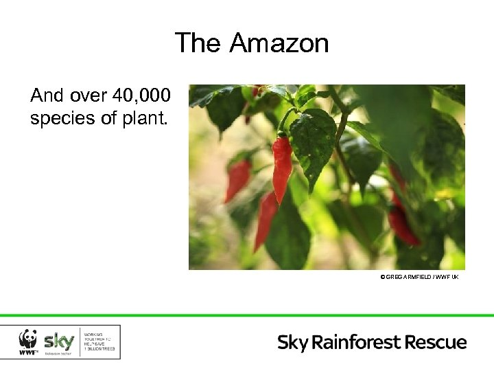 The Amazon And over 40, 000 species of plant. © GREG ARMFIELD / WWF