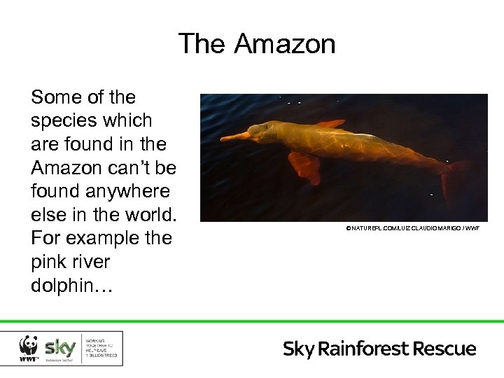 The Amazon Some of the species which are found in the Amazon can't be