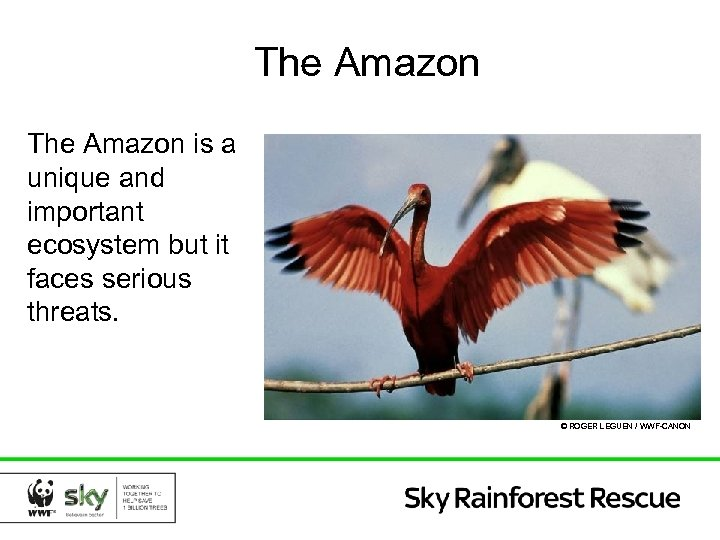 The Amazon is a unique and important ecosystem but it faces serious threats. ©