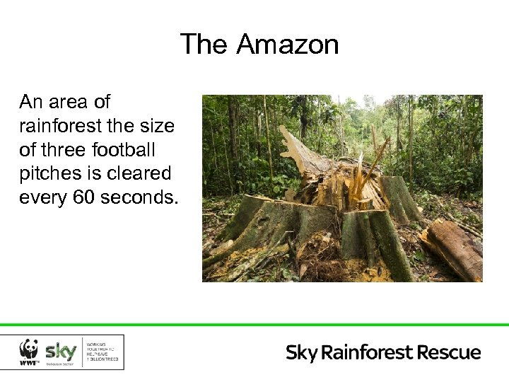The Amazon An area of rainforest the size of three football pitches is cleared