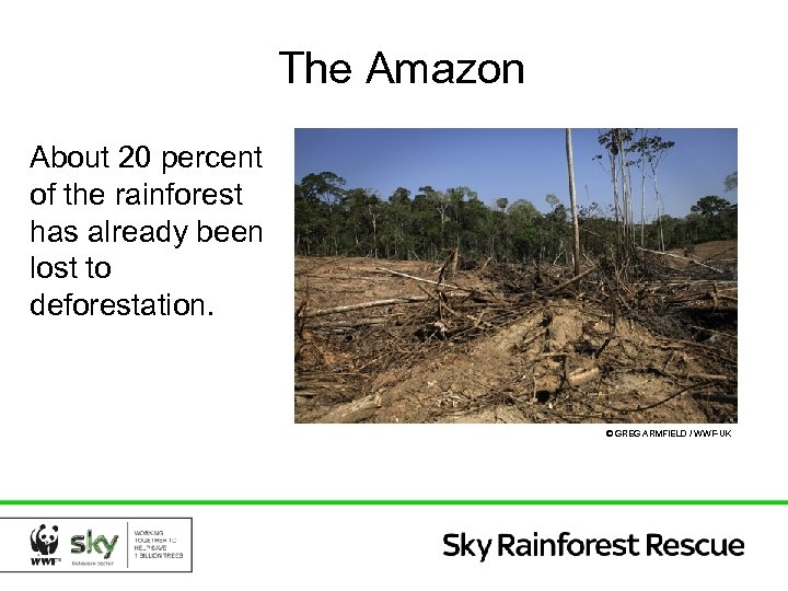 The Amazon About 20 percent of the rainforest has already been lost to deforestation.