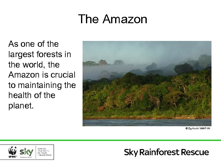 The Amazon As one of the largest forests in the world, the Amazon is