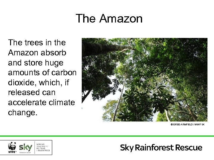 The Amazon The trees in the Amazon absorb and store huge amounts of carbon
