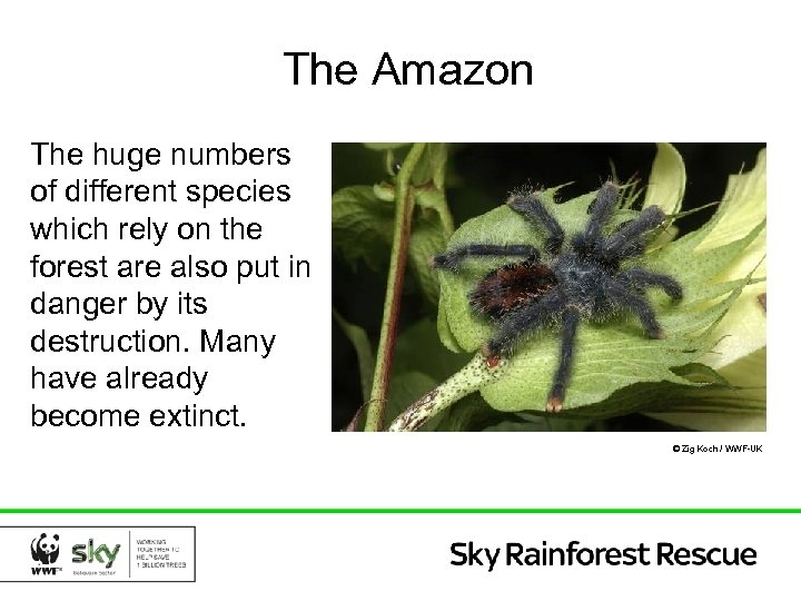 The Amazon The huge numbers of different species which rely on the forest are