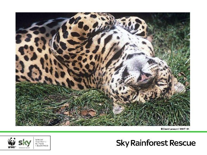 © David Lawson / WWF-UK