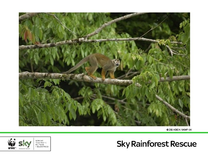 © ZIG KOCH / WWF-UK