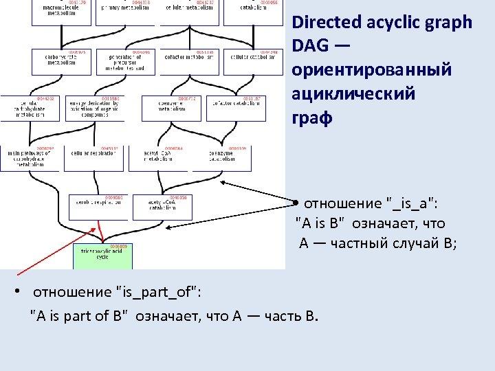 Directed acyclic graph DAG — ориентированный ациклический граф • отношение
