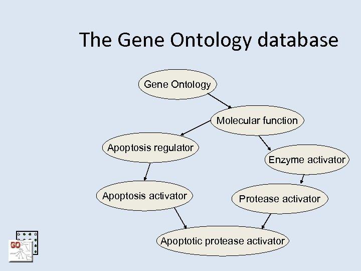 The Gene Ontology database Gene Ontology Molecular function Apoptosis regulator Enzyme activator Apoptosis activator