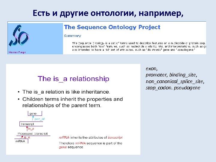 Есть и другие онтологии, например, exon, promoter, binding_site, non_canonical_splice_site, stop_codon. pseudogene
