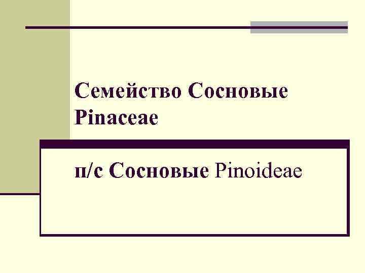 Семейство Сосновые Pinaceae п/с Сосновые Рinoideae