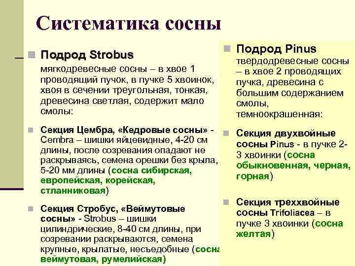 Систематика сосны n Подрод Strobus n Подрод Pinus твердодревесные сосны – в хвое 2