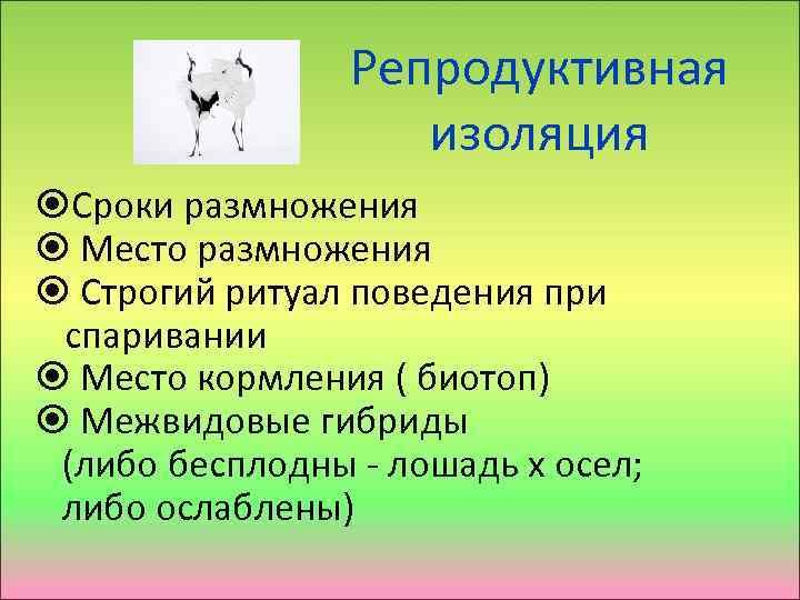 Репродуктивная изоляция Сроки размножения Место размножения Строгий ритуал поведения при спаривании Место кормления (