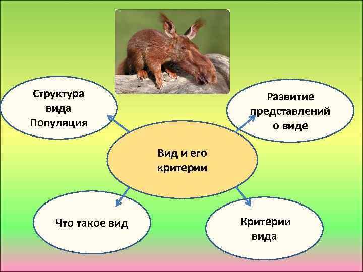 Структура вида Популяция Развитие представлений о виде Вид и его критерии Что такое вид