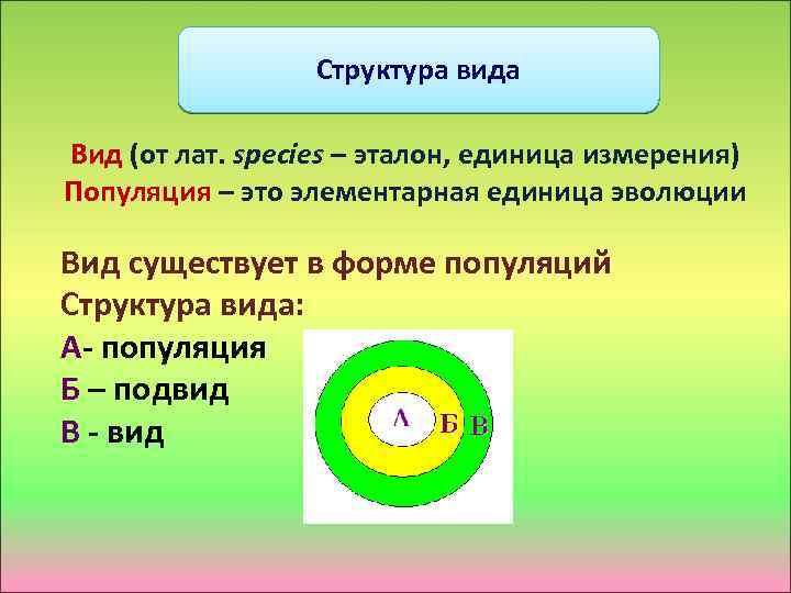 Структура вида Вид (от лат. species – эталон, единица измерения) Популяция – это элементарная