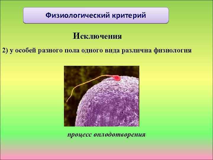 Физиологический критерий Исключения 2) у особей разного пола одного вида различна физиология процесс оплодотворения