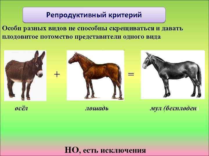 Репродуктивный критерий Особи разных видов не способны скрещиваться и давать плодовитое потомство представители одного