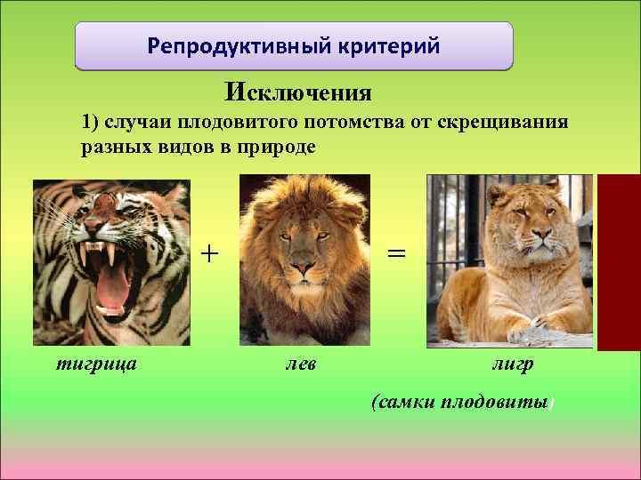 Репродуктивный критерий Исключения 1) случаи плодовитого потомства от скрещивания разных видов в природе +