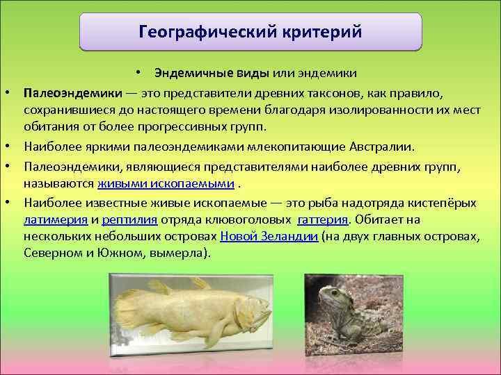 Географический критерий • • • Эндемичные виды или эндемики Палеоэндемики — это представители древних