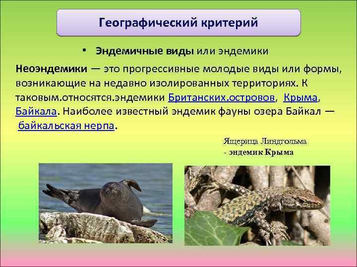 Географический критерий • Эндемичные виды или эндемики Неоэндемики — это прогрессивные молодые виды или