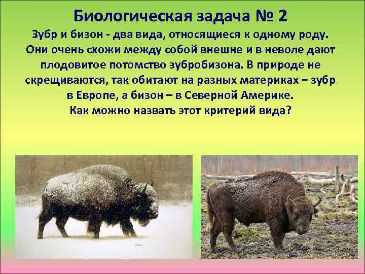 Биологическая задача № 2 Зубр и бизон - два вида, относящиеся к одному роду.