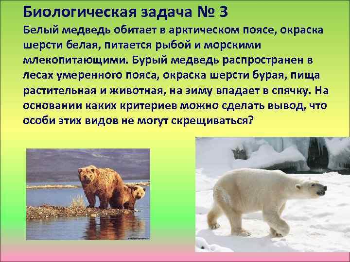Биологическая задача № 3 Белый медведь обитает в арктическом поясе, окраска шерсти белая, питается
