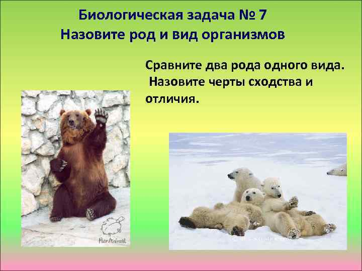 Биологическая задача № 7 Назовите род и вид организмов Сравните два рода одного вида.