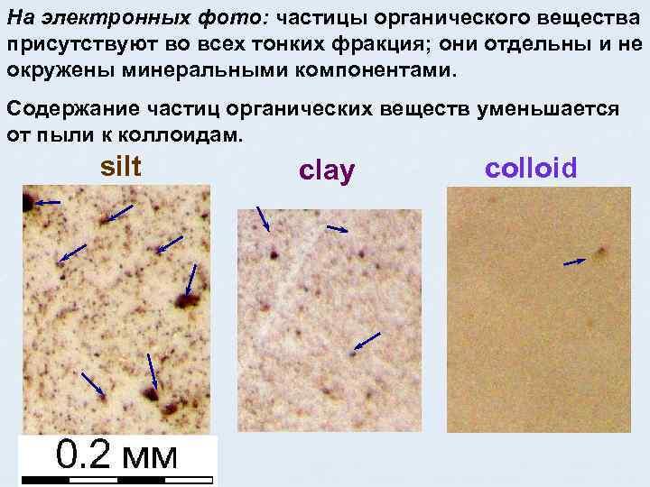 На электронных фото: частицы органического вещества присутствуют во всех тонких фракция; они отдельны и