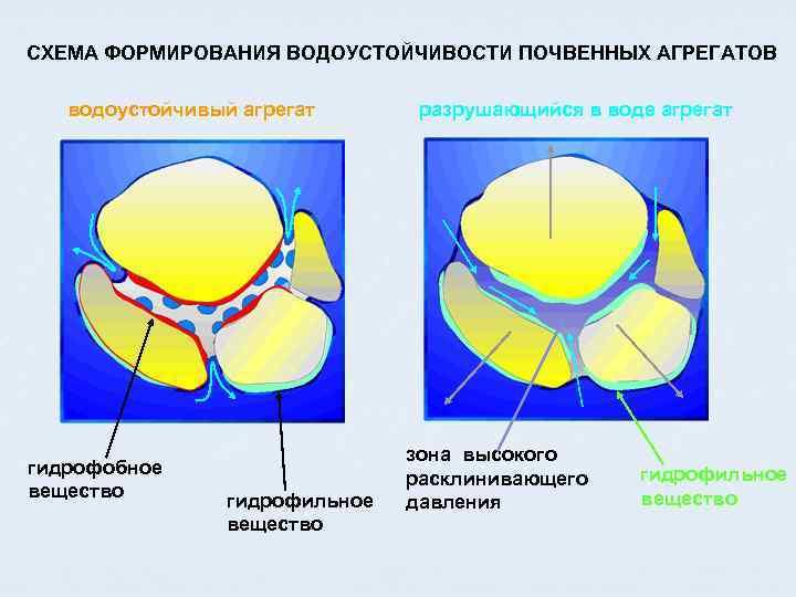 СХЕМА ФОРМИРОВАНИЯ ВОДОУСТОЙЧИВОСТИ ПОЧВЕННЫХ АГРЕГАТОВ водоустойчивый агрегат гидрофобное вещество гидрофильное вещество разрушающийся в воде