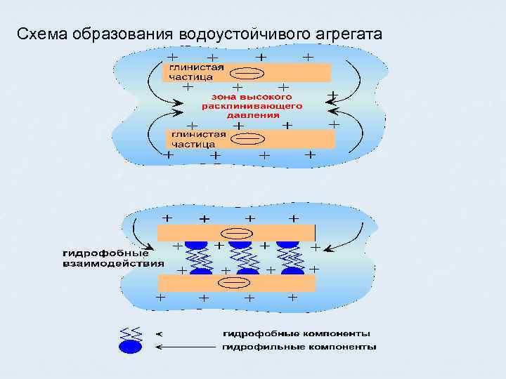 Схема образования водоустойчивого агрегата