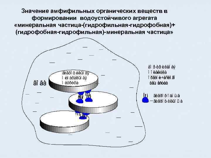 Значение амфифильных органических веществ в формировании водоустойчивого агрегата «минеральная частица-(гидрофильная-гидрофобная)+ (гидрофобная-гидрофильная)-минеральная частица»