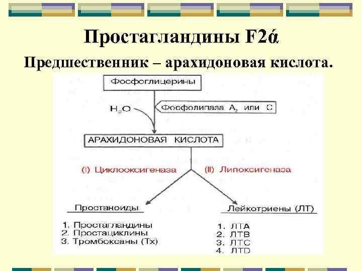 Простагландины F 2ά Предшественник – арахидоновая кислота.