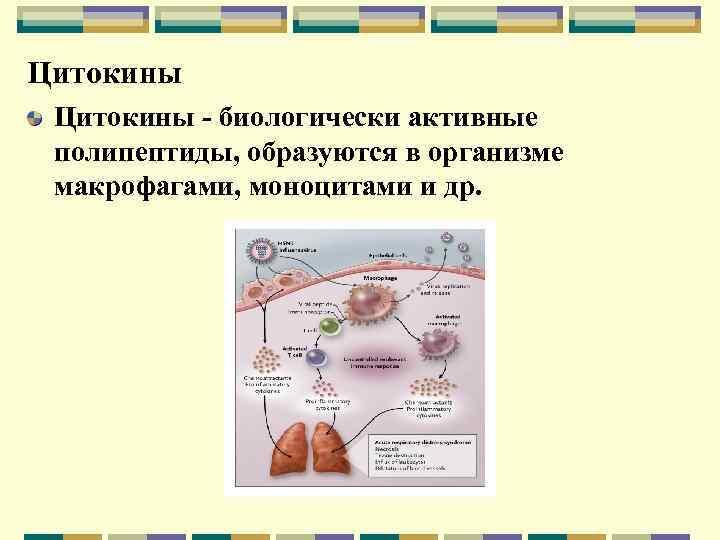 Цитокины - биологически активные полипептиды, образуются в организме макрофагами, моноцитами и др.