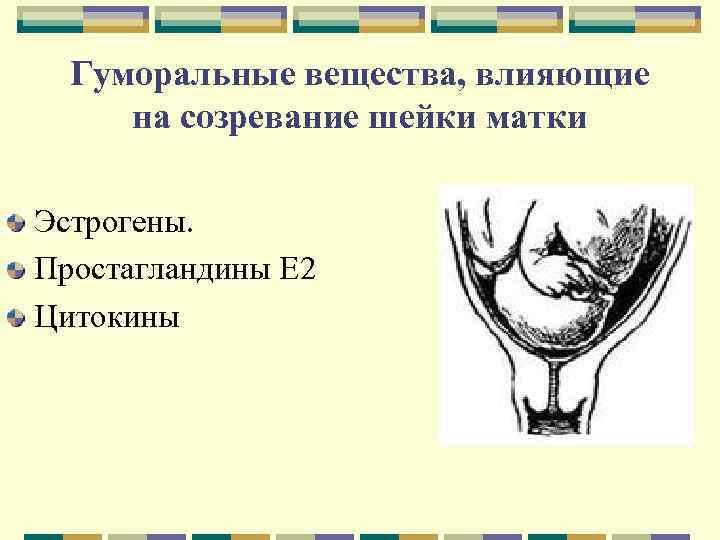 Гуморальные вещества, влияющие на созревание шейки матки Эстрогены. Простагландины Е 2 Цитокины
