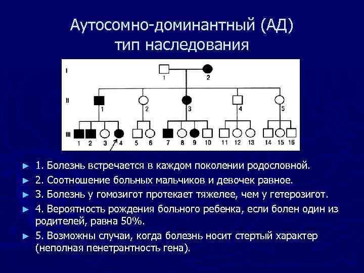 Аутосомно-доминантный (АД) тип наследования ► ► ► 1. Болезнь встречается в каждом поколении родословной.