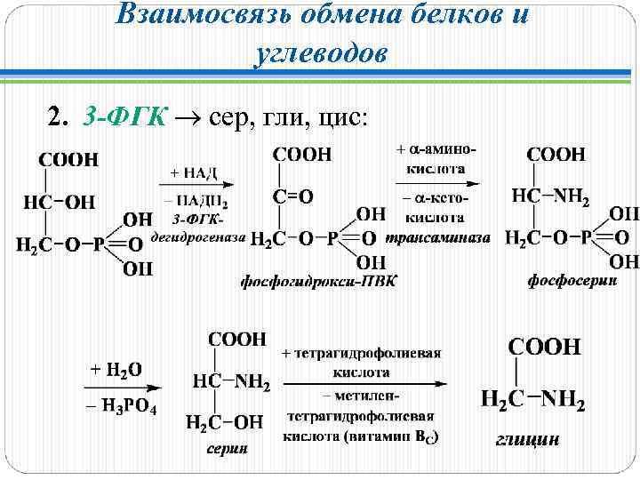 Взаимосвязь обмена белков и углеводов 2. 3 -ФГК сер, гли, цис: 3 -ФГК