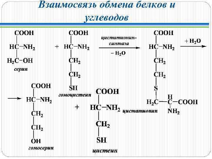Взаимосвязь обмена белков и углеводов