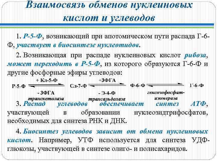 Взаимосвязь обменов нуклеиновых кислот и углеводов 1. Р-5 -Ф, возникающий при апотомическом пути распада