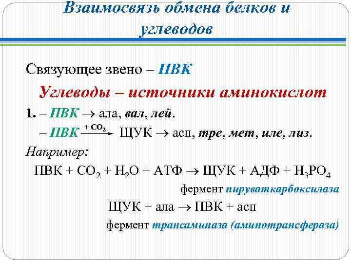Взаимосвязь обмена белков и углеводов Связующее звено – ПВК Углеводы – источники аминокислот 1.
