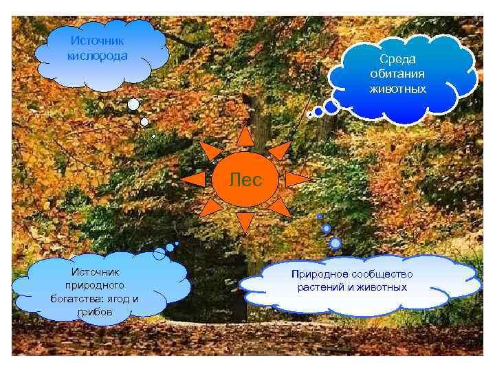 Источник кислорода Среда обитания животных Лес Источник природного богатства: ягод и грибов Природное сообщество