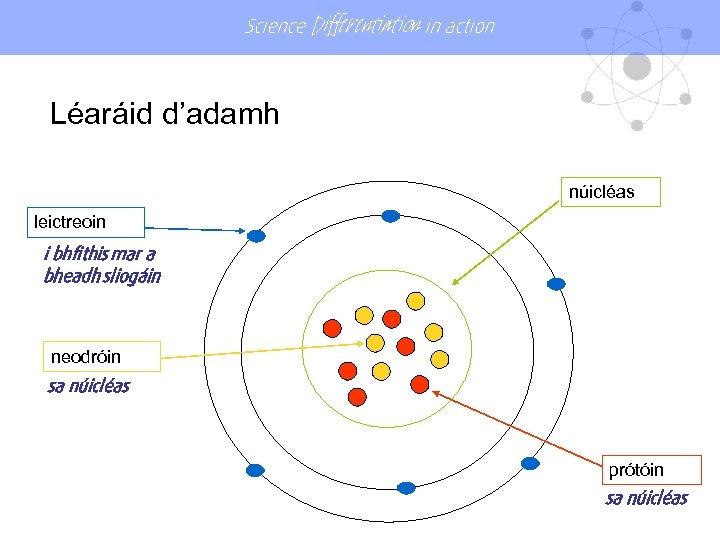 Science Differentiation in action Léaráid d'adamh núicléas leictreoin i bhfithis mar a bheadh sliogáin